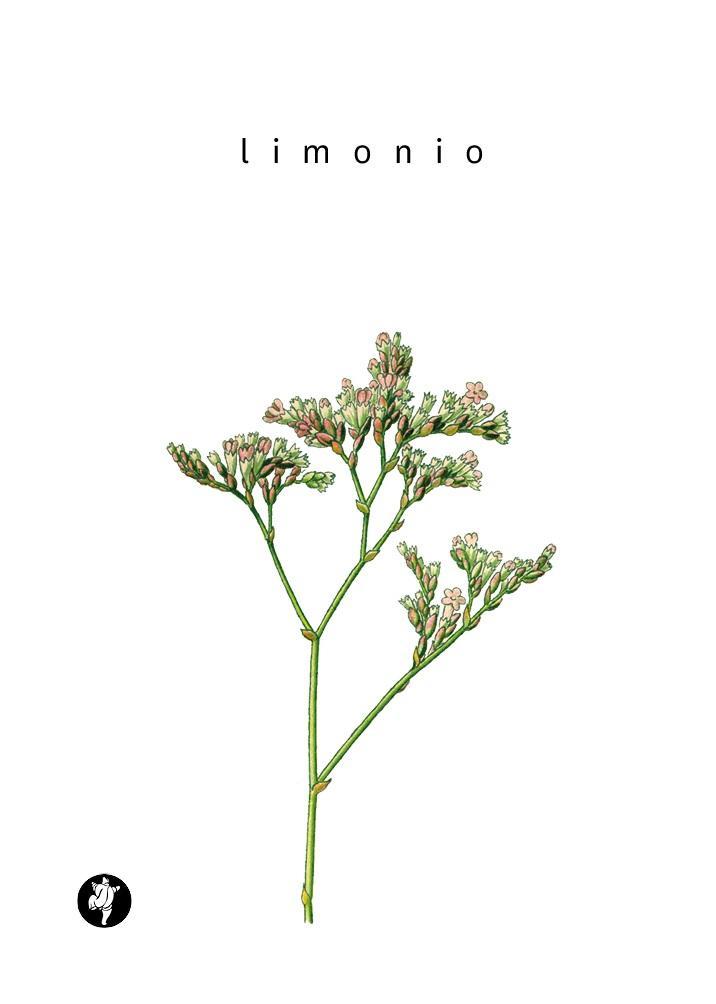 copertina_lillo_limonio